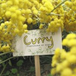 gardenlabels-curry